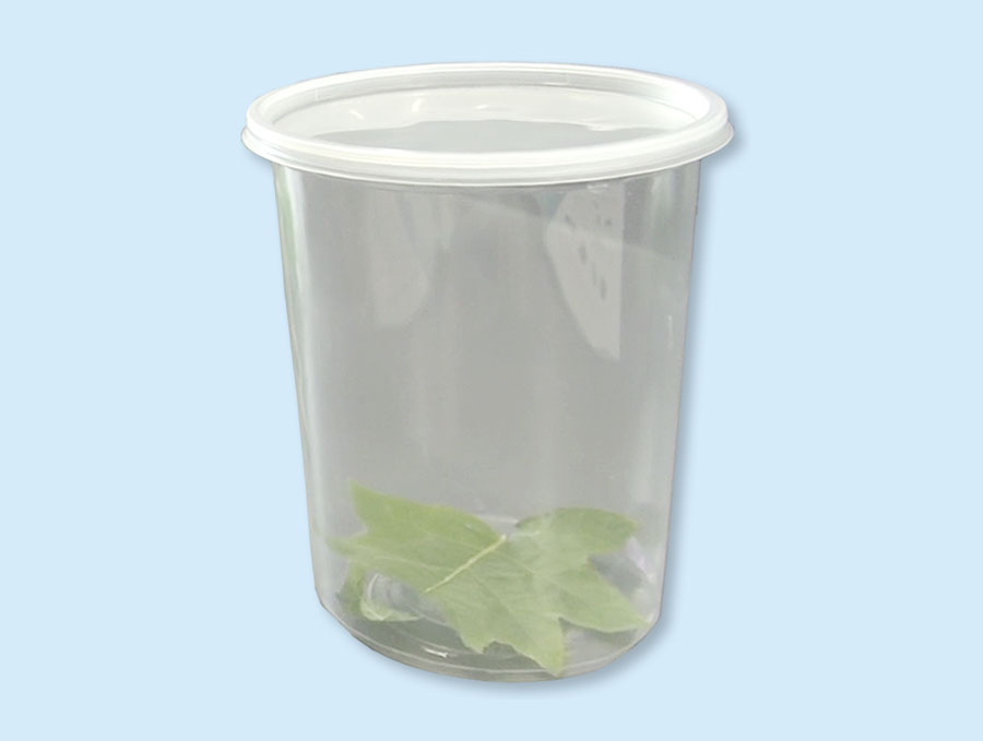 Leaf sealed in a plastic container.